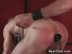 Collared Bear Instincts Video 377 part1