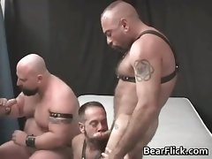 Four kinky bear lads having extreme homo part6