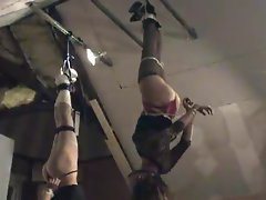 Stupid Vixens Bound & Hung from the Ceiling